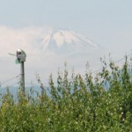 fuji_6
