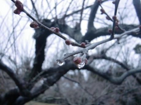 ume-blossom_54