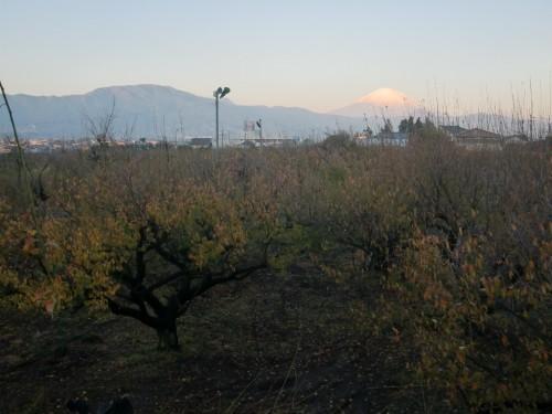 曽我梅林、秋の朝