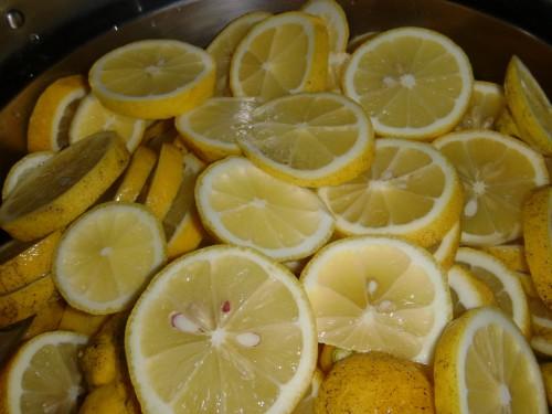 自家農園 無農薬レモン
