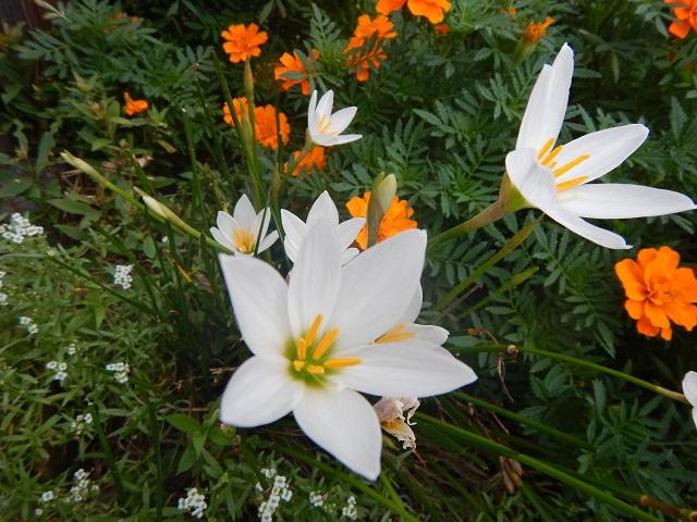 昇珠園 秋の花