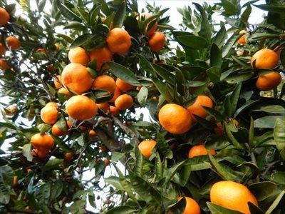 自家農園で収穫したての果物をお届けします~価格が気になる方は【昇珠園】のサイトをチェック~