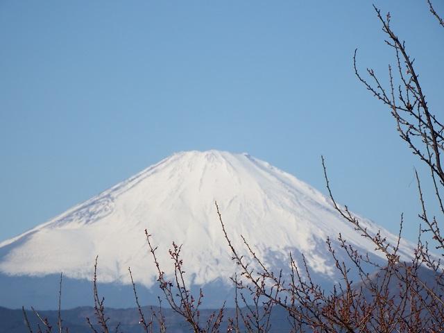 曽我梅林より富士山